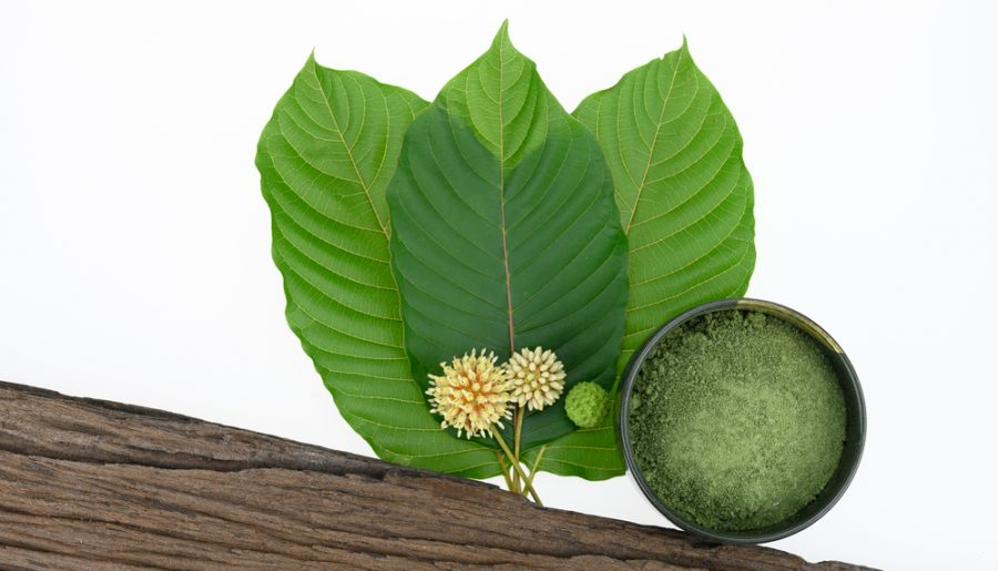 Acadia Kratom 2020: What you need to know