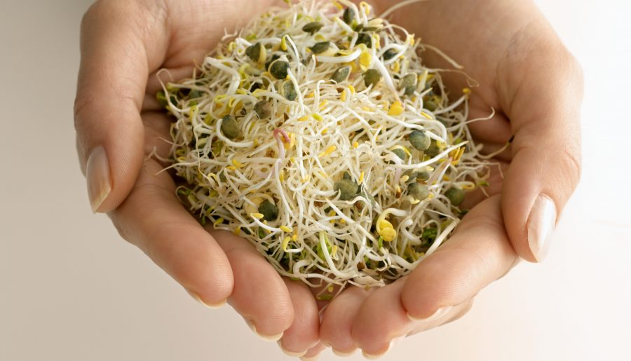 6 Amazing Alfalfa Benefits, Nutrition & How to Grow Sprouts